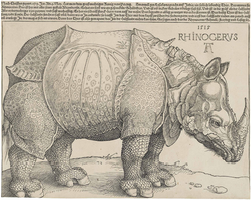 Albrecht Durer, Rhinoceros, 1515. Courtesy Wikipedia.